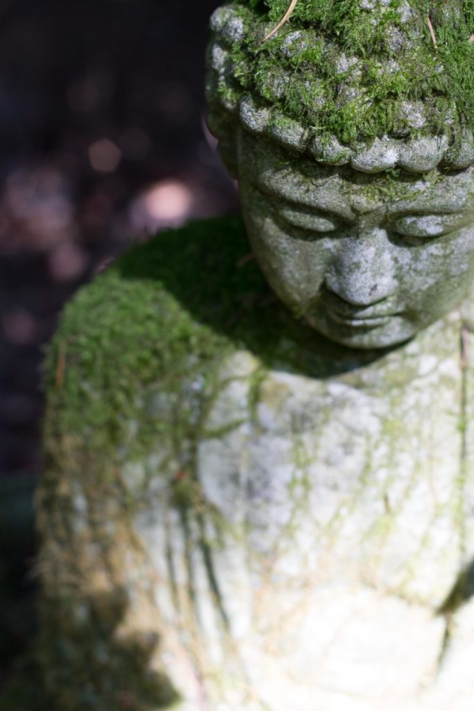 Buddhism is not Buddhism mossy buddha image